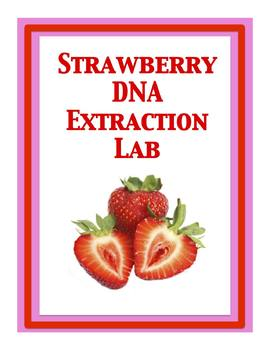 strawberry extraction lab