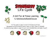 Strawberry Life Cycle Unit for Home Learning