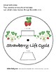 Strawberry Lifecycle Bundle