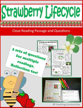 Strawberry Lifecycle Close Reading