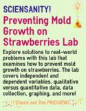 Strawberry Mold Growth Lab