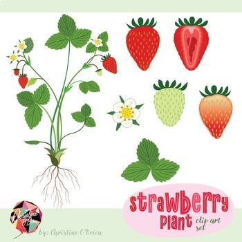 Strawberry Plant Clip Art Set