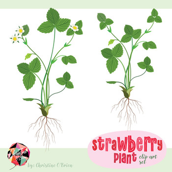 Strawberry Plant Clip Art