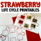 Strawberry plant life cycle cards and mat (Montessori)