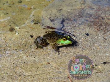 Stress-Free Stock Photo - Frog #1
