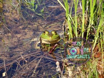 Stress-Free Stock Photo - Frog #3