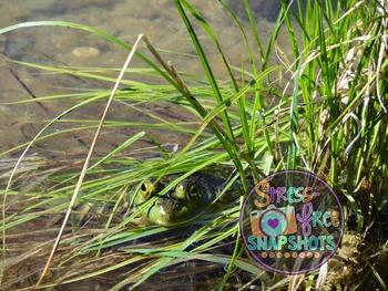 Stress-Free Stock Photo - Frog #4