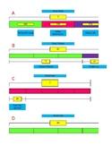 Strip Diagrams  4th grade