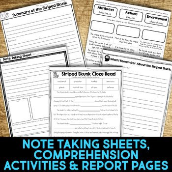 Striped Skunk Informational Article, Comprehension & Vocabulary Activities