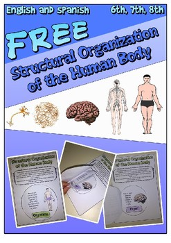 Structural Organization of the Human Body - FREE - EN - ES