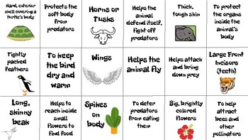 Structure & Function Matching Game / Center / Activity