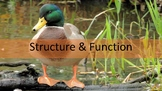 Structure & Function Review
