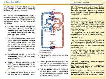 Structure, Function, and Medical Terminology of The Heart