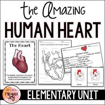 Anatomy of the Heart Activity Pack