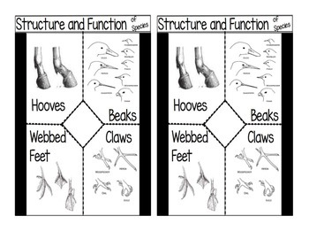 Structure and Function of Species