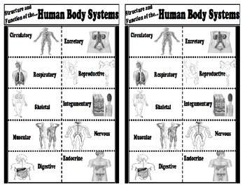 Structure and Function of the Human Body Systems