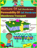 Structure of Cell Membrane, Its Permeability and Membrane Transport