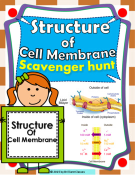 Structure of Cell Membrane Scavenger Hunt