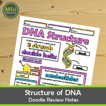 Structure of DNA Middle, High School Biology Doodle Notes