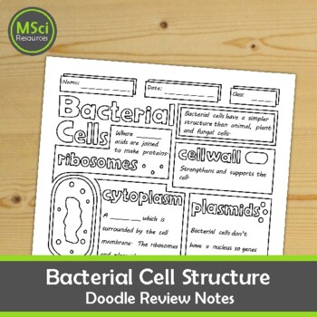 Structure of a Bacterial Cell Biology Middle School Doodle Color Review
