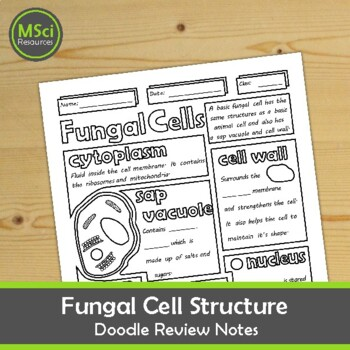 Structure of a Fungal Cell Doodle Sheet Visual Guided Notes Biology