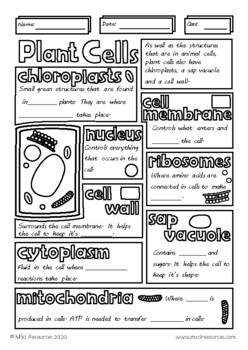 Structure of a Plant Cell Biology Middle School Doodle Review