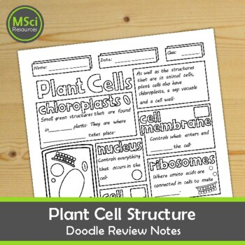 Structure of a Plant Cell Doodle Sheet Visual Guided Notes Biology