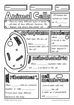 Structure of an Animal Cell Doodle Sheet Visual Guided Notes Biology