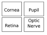 Structure of the Eye Card Sort