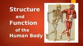 Structure of the Human Body PowerPoint