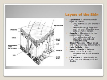 Anatomy - Structure of the Human Body System Unit