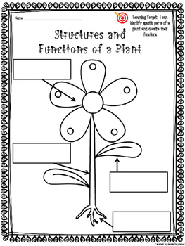 Structures and Functions of Plants Poster Project