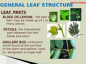Structures and Functions of a Plant Leaf