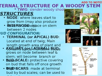 Structures and Functions of a Plant Stem