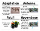 Structures of Life Science Vocabulary Cards (FOSS Structures of Life Module)
