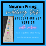 Student-Driven Neuron Firing Modeling: Hands-On Activity
