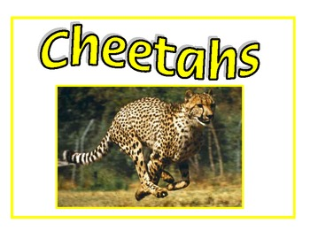 Student Groups Posters - Cats in the Wild
