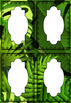 Student Name Tags ~ Tropical Design ~ Editable