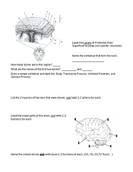 Study Guide for Head, Neck, and Back Unit in Sports Medicine