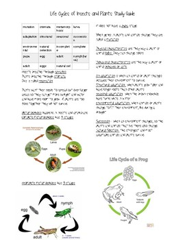 Study Guide or Outline over Plant Cycles and Animals Cycles