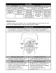 Study Sheet - Directional Terminology for Anatomy Students (HS-LS1)