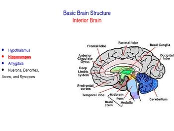 Study Skills - A Bit About Brainy - Lesson 3