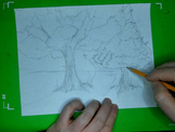 Studying Nature Drawing Trees Hints & Tips To Drawing Trees Video