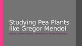 Studying Pea Plants like Gregor Mendel