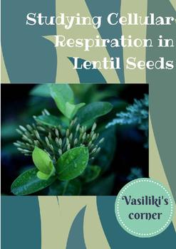 Studying cellular respiration in lentil seeds