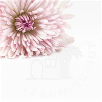Styled Stock Photo 2 [Flower 1]