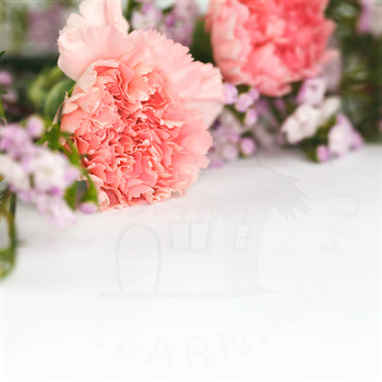 Styled Stock Photo 28 [Flower 3]