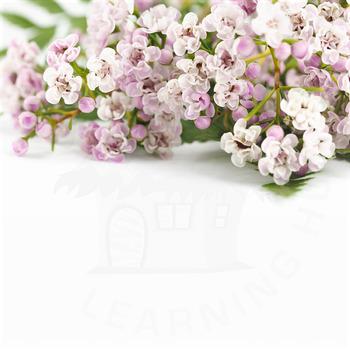 Styled Stock Photo 31 [Flower 4]