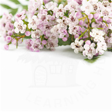 Styled Stock Photo 31 [Flower 4]