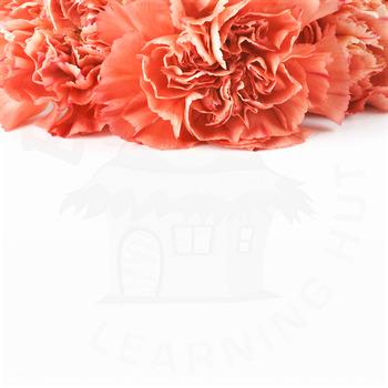 Styled Stock Photo 8 [Flower 2]